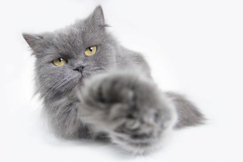 Katten trimsalon Just4Cats